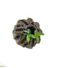 صابون ژله ای جلبک