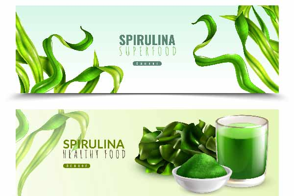 اولین تولید کننده جلبک اسپیرولینا