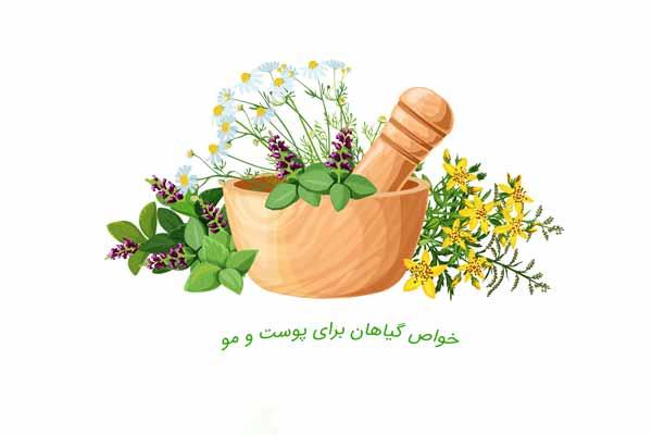 خواص گیاهان برای پوست و مو