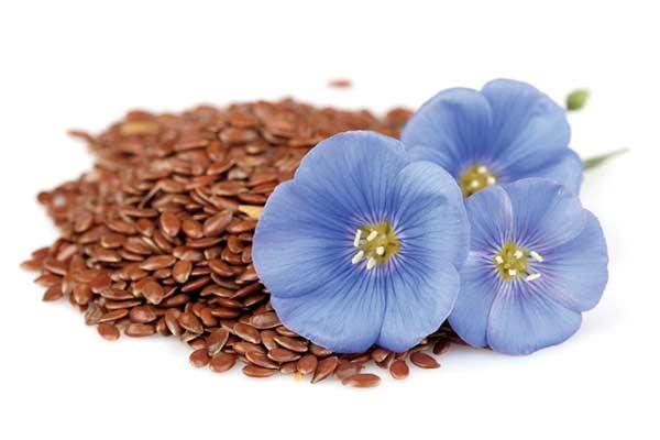 گیاه کتان (Linum Usitatissimum) یا بَزرَک چیست؟
